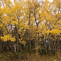 Apens, Bridger Range near Bozeman, Montana