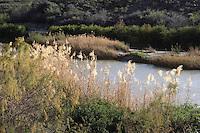 Rio Grande near Contrabando Movie Set, Big Bend Ranch State Park, Texas