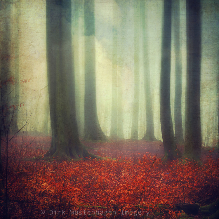 Dreamy forest<br />