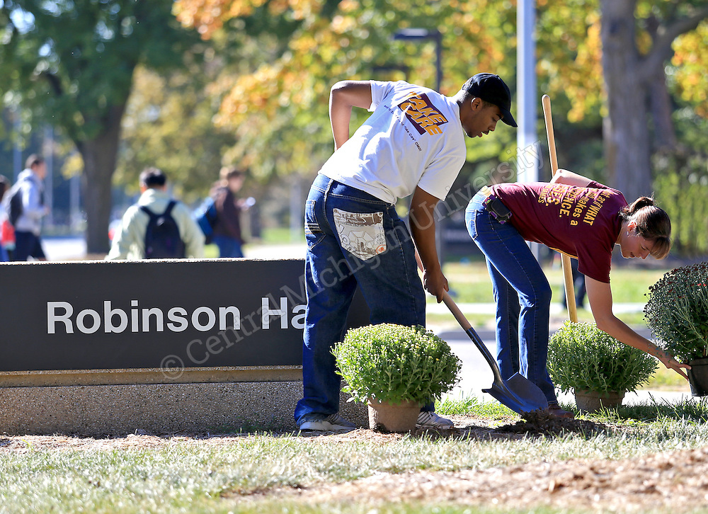Students are planting about 1,500 maroon and gold mums near the residence halls and around campus today. How's that for school spirit? The mums were sponsored by Residence Life. SEPTEMBER 27, 2013. Central Michigan University Photos by Steve Jessmore