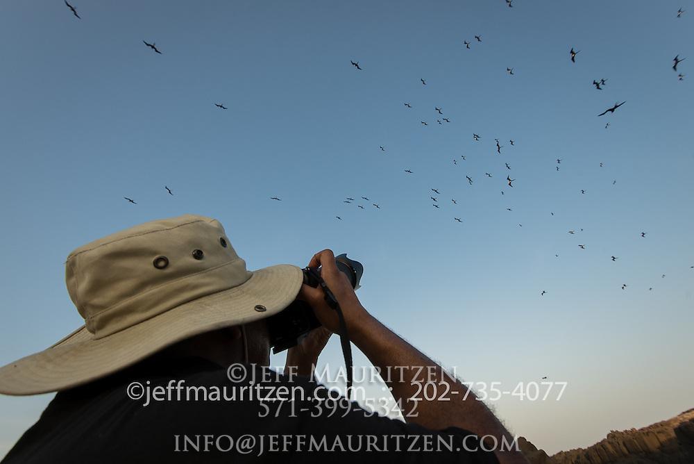A man takes a photo of a fleet of magnificent frigatebirds.