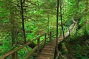 Boardwalk in the temperate rain forest<br /> Pacific Rim National Park<br /> British Columbia<br /> Canada