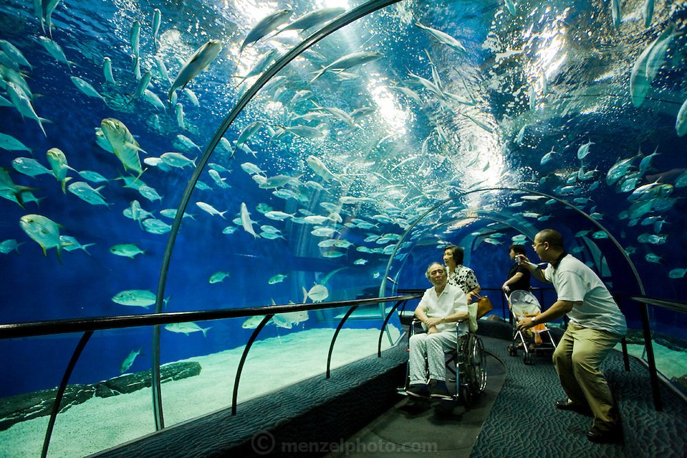 Tourists take pictures of fish and other marine life at the Shanghai Aquarium in Pudong, Shanghai, China