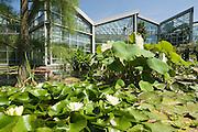 Palmengarten, Tropicarium, Seerosen, Frankfurt am Main, Hessen, Deutschland | Palmengarten, botanical garden in Frankfurt, Tropicarium , Germany