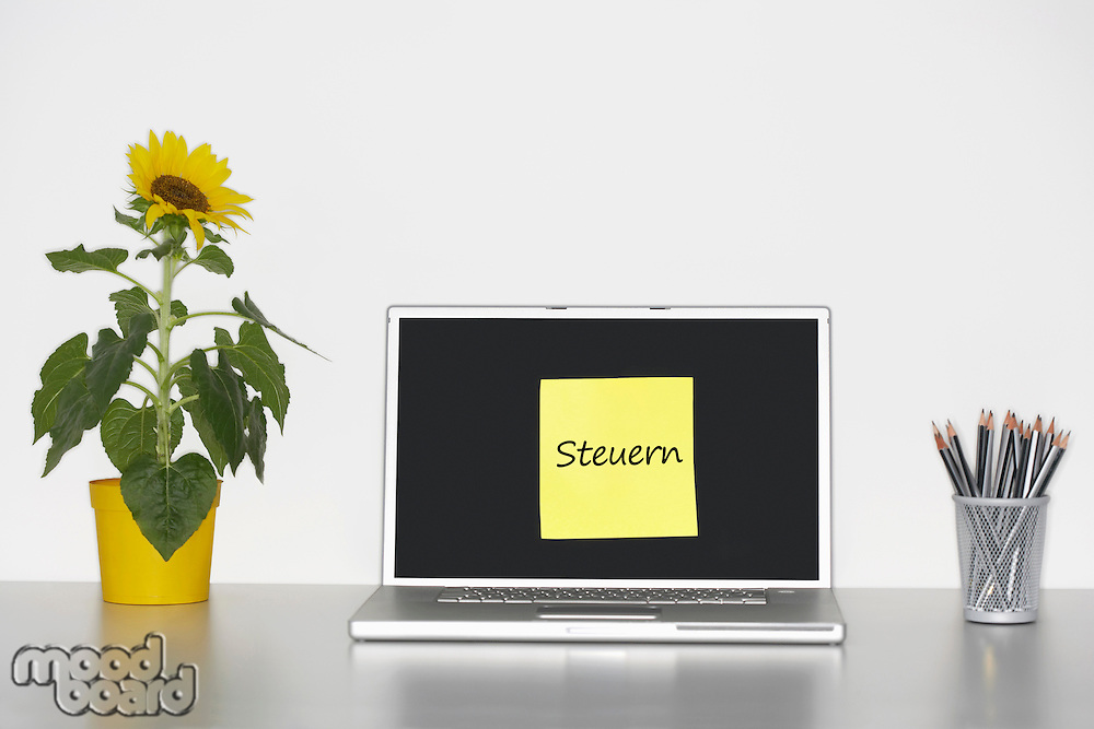 Sunflower plant on desk and sticky notepaper with German text on laptop screen saying Taxes