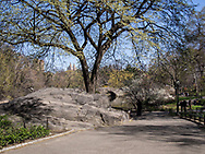 Rock formation at The Pond in Central Park
