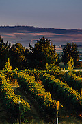 Northstar Vineyards