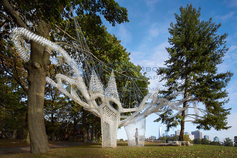 The Governor's Cup Pavilion hovers among a cluster of trees on the Parade Ground. Inspired by tape-lace crochet, 30000 used plastic cups, saved from discard from throughout the city, are bound by zip-ties into a densely-knit serpentine structure. Undulating between the tree branches, the canopy is suspended by strapping and turn-buckled cabling. The trees are unscathed. A lacy infill of cups between the tape structure and branches create an airborne topography and shadow play. The configuration forms an outdoor room, shimmering in the sun and echoing with breeze-driven sound.
