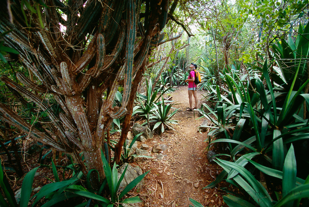 356201-1027 ~ Copyright:  George H. H. Huey ~ Hiker exploring the Yawzi Point Trail with large agaves and cactus, southeast coast of St. John Island, U.S. Virgin Islands National Park. Caribbean. Release #127