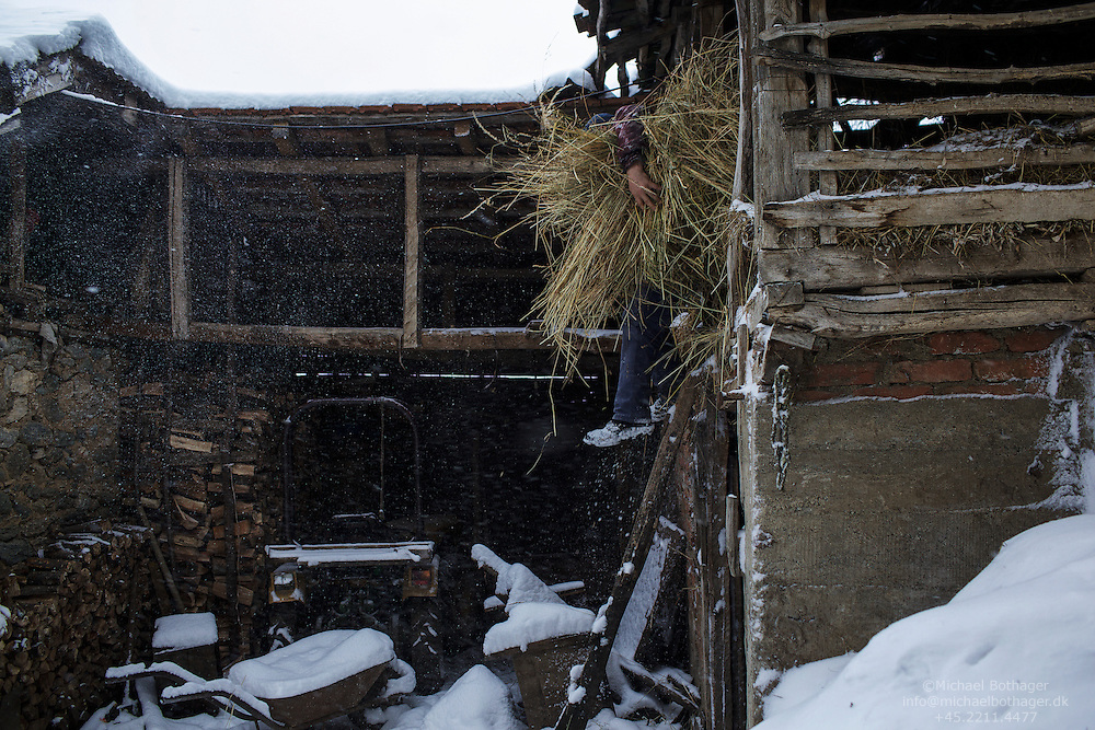 Dragan Todorovic, 43, collects hay for his horse. He later had to sell the horse during financial hard times.