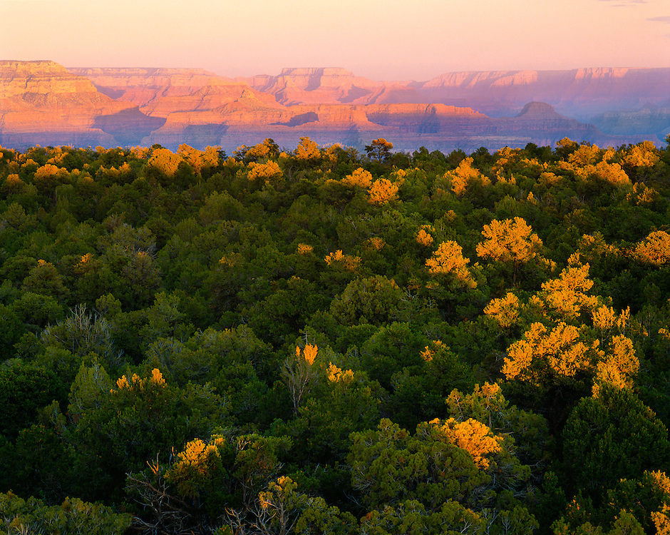 0107-1048B ~ Copyright:  George H. H. Huey ~ Pinyon-Juniper forest on South Rim, with North Rim in distance. Grand Canyon National Park. Arizona.