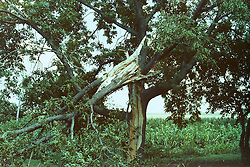 mid to late 1970's - storm damage in central Illinois<br /> <br /> <br /> Archive slide, negative and print scans.