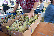 "Jerry Lehman, a member of the Pawpaw Growers Association, sells pawpaws at his table at the Pawpaw Festival on Sept. 17, 2016. Lehman said he has about 250 pawpaw trees at his orchard in Indiana. ""I've been around Pawpaws all my life,"" he said."