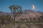Not seen since 32 years ago in 1982, the Supermoon has once again coincided with a lunar eclipse on September 27th 2015, as well as with the harvest moon.  With the moon being closer in its oval orbit to the sun by an extra 20,000 miles, the moon appears larger.  The next combination of a superman and total lunar eclipse won't happen again until 2033.<br /> <br /> At Joshua Tree National Park, we were treated to a stunning partial eclipse rising above the horizon, which then progressed to quite a lengthy full eclipse.