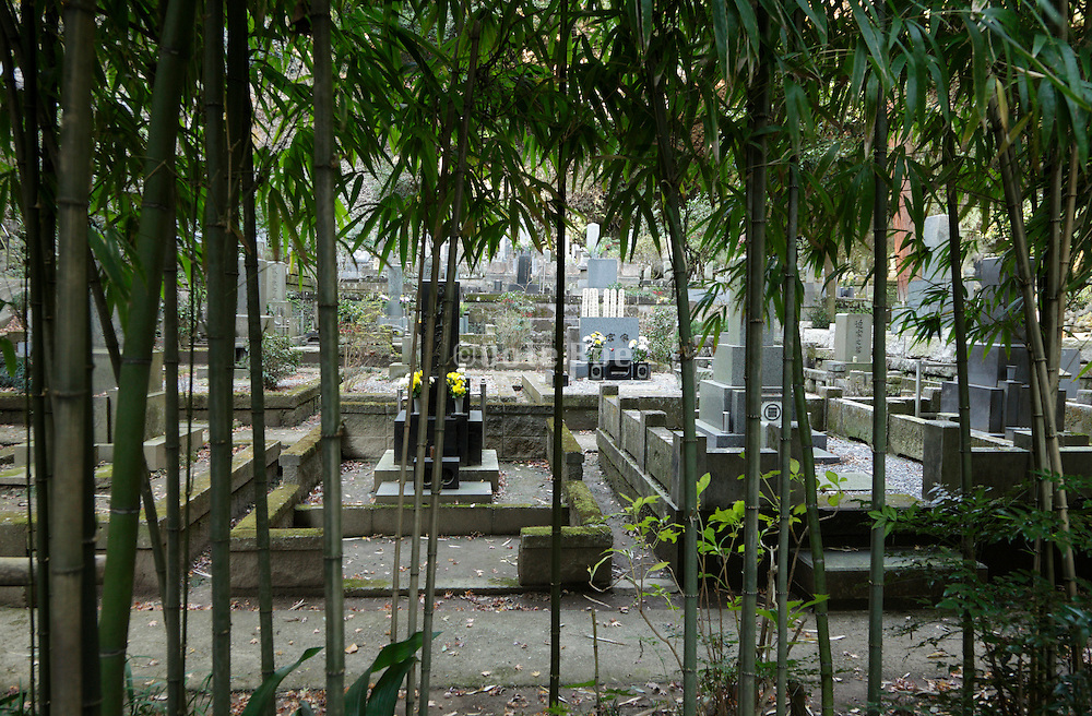 graveyard behind a bamboo hedge Japan Kamakura