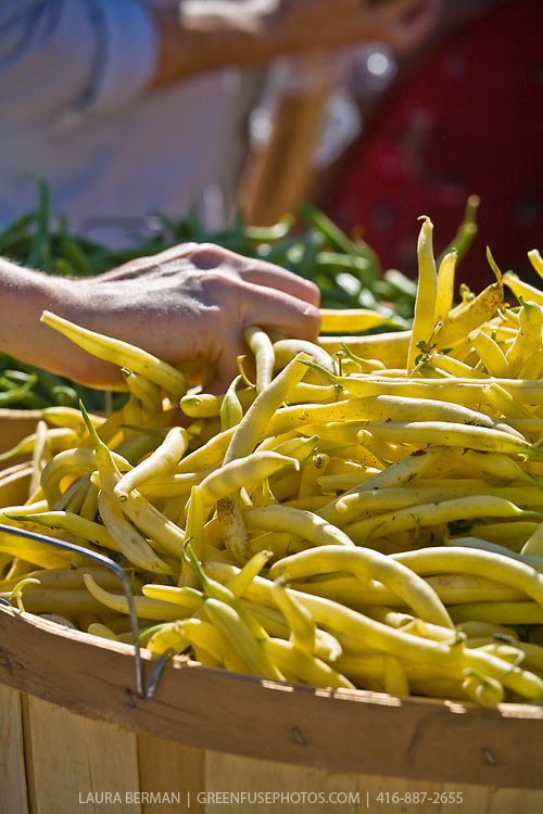 A bushel basket of organically grown yellow beans.