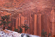 Juniper and water stained sandstone cliff in winter, Grand Gulch, Capitol Reef National Park, Utah
