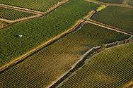 France, Languedoc Roussillon, Gard (30), région Uzès, vignes, vendanges mécaniques