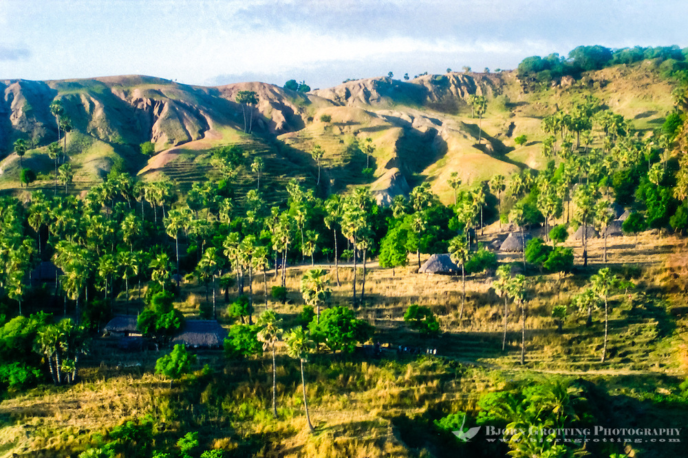Pulau Sawu, East Nusa Tenggara. A village with traditional houses built by timber and leafs from palm trees. A group of curiously waving people can be seen in the lower center of the image. This is from southern Sawu (from helicopter)