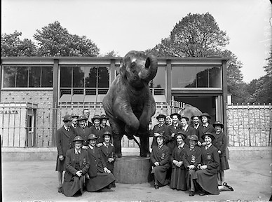 Pupils from Our Lady's Bower Convent, Athlone, Co. Westmeath visit Dublin Zoo, Phoenix Park, Ireland.<br /> 09.05.1960