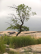 tree growing on rocks with some grass around it