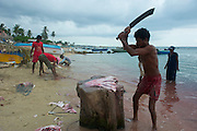 Chopping stingray on the beach at Point Pedro.