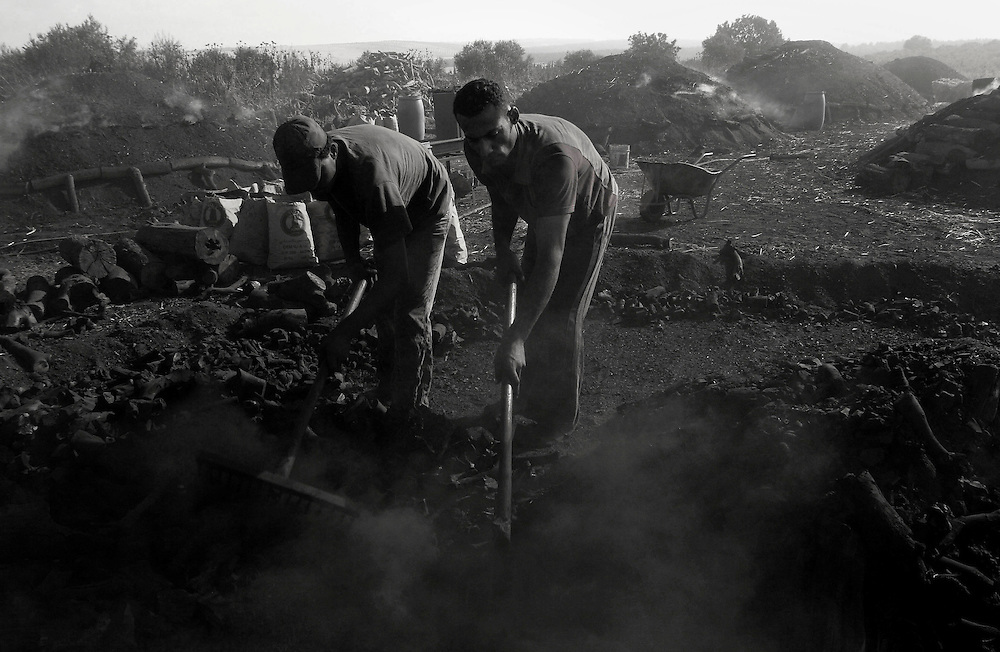 Kabah Haled 25 ( on the left) and his brother Hadder Kabah 17  open a new pile of charcoals after three weeks of slow burning in  the pile , they fill it up in Sacks for selling it ... Village of Arra Israel ..Monday April 5, 2008,..