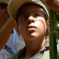 Los Palmeros de Chacao son herederos de una tradición que data de cerca de 1770, cuando el párroco José Antonio Mohedano, ante la recurrencia de la peste de la fiebre amarilla que azotaba el valle de Caracas, quiso solicitar clemencia a Dios con una promesa y envió a los peones de las haciendas cercanas a la montaña (Hoy Parque Nacional El Avila), a buscar la palma real para que bajaran sus hojas, evocando el pasaje bíblico de la entrada de Jesús a Jerusalén). Caracas, 31 de Marzo del 2012. Jimmy Villalta