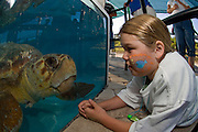 Visitors to the Marinelife Center of Juno Beach watch a male Loggerhead Turtle (Caretta caretta) recuperating in a tank after being bitten by a large shark.