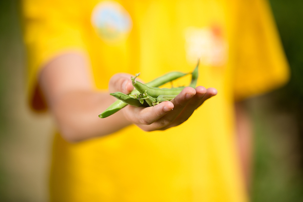 Hand holding green beans<br /> Brunswick, Maine