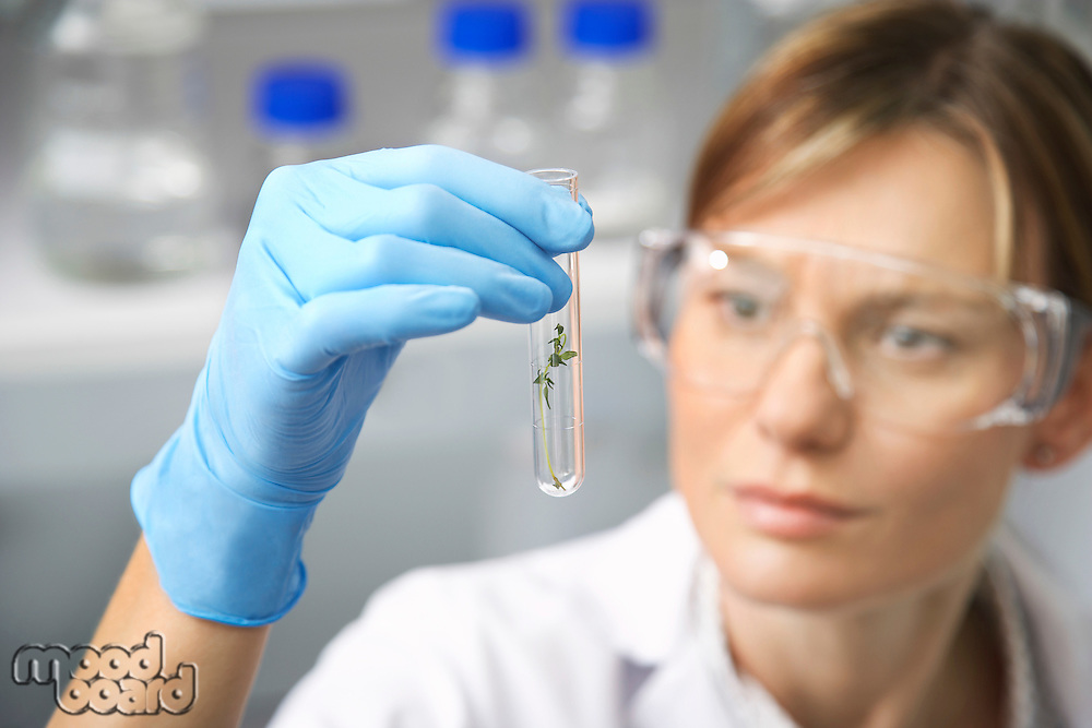 Scientist examining plant in test tube in laboratory focus on test tube