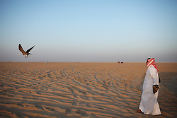 A competitor releases his al-Hurr falcon. A moment later, he entered his off-road vehicle to chase after the bird as it chased a pigeon. The pursuit can often send both falcon and owner miles into the desert.
