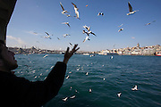 Istanbul. Man feeding seagulls from aboard a ferry boat across the Bosphorus. In background from l.: Yeni and Suleyman Mosques, Galata Bridge, Galata Tower.