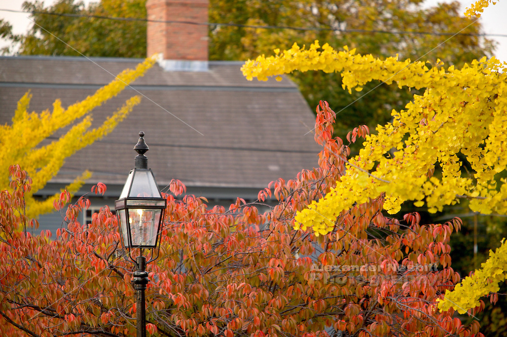 Newport RI - gas lamp with fall leaves and colonial building, Thames Street
