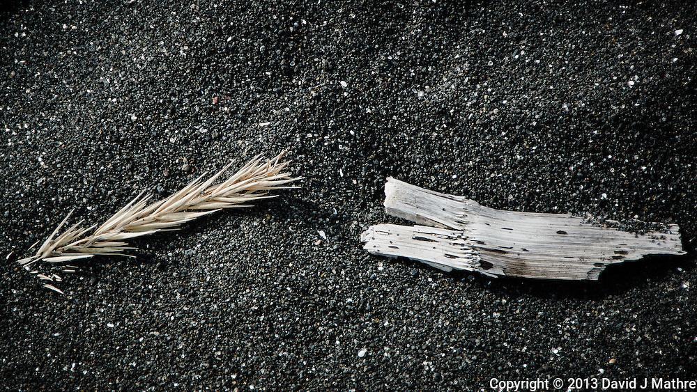 Grass Seed and Driftwood on a Black Volcanic Sand Beach. Vestmannaeyjar Iceland. Image taken with a Nikon 1 V2 camera and 10-100 mm VR lens (ISO 160, 69 mm, f/5.6, 1/500 sec). Nikonians Academy Iceland Photo Adventure.