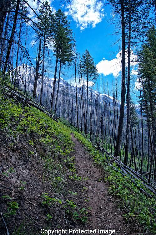 Hoodoo Creek trail., British Columbia, canada, Isobel Springett