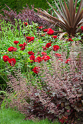 Rose, heuchera and cordyline in the Red Borders at Hidcote Manor Garden