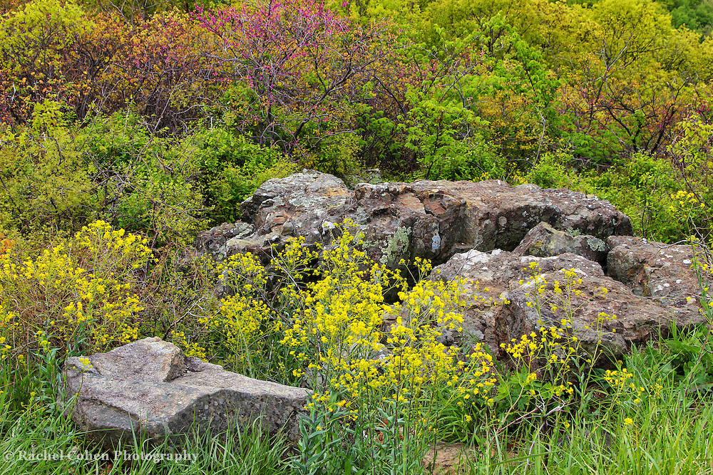 &quot;Flowers and Stone&quot;<br /> <br /> The bounties of spring can be seen in this lovely image of large boulders surrounded by colorful wildflowers!!<br /> <br /> The Blue Ridge Mountains by Rachel Cohen