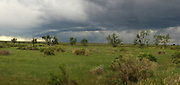 A spring storm rolls in over Sun Prairie at American Prairie Reserve in the Great Plains of Montana. South of Malta in Phillips County, Montana.