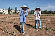 Vietnamese workers in a asparragus field near Paphos, Cyprus. Cyprus had been rescue by the EU. Documentary around the island.