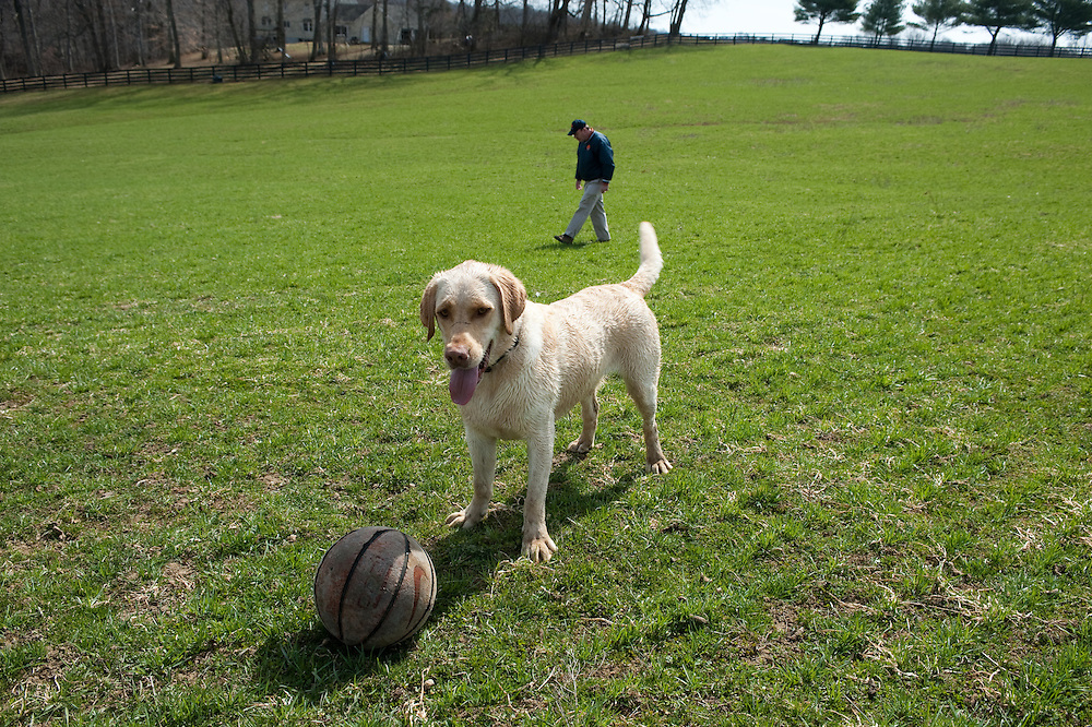 Dog with a ball playing in a field