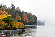 Fog and Fall colours at Stanley Park in Vancouver, British Columbia, Canada