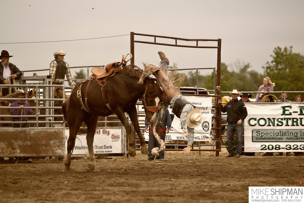 A cowboy gets thrown off a saddle bronc, Eagle Rodeo, Eagle, Idaho, USA