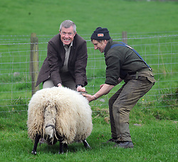 Willie Rennie, Kelty, 21-4-2017<br /> <br /> Willie Rennie with Stuart McDougall of Mill House handling a sheep<br /> <br /> (c) David Wardle | Edinburgh Elite media