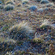 The colors of autumn grasses backlit at sunrise in Los Glacieres National Park, Argentina.