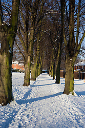 Ecclesfield Parks Lime Tree Avenue at one third of a mile long it has one tree planted for each Ecclesfield man who was killed in the great war of 1914-1918 and as such is a War Memorial. Originally planted in the 1920's there were 53 trees...7 January 2010.© Paul David Drabble