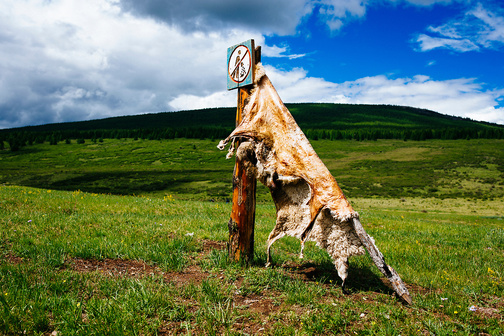 A sheep hide stretches out to cure on a mountainside in northern Mongolia.
