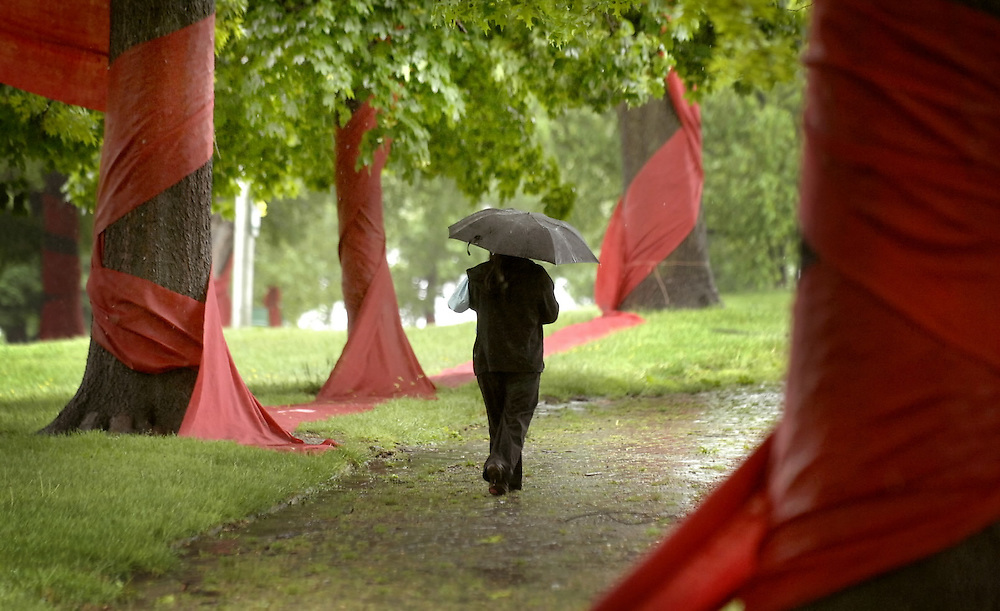 BALTIMORE, MD--5/9/08--A lone pedestrian armed with an umbrella walks through a maze of trees adorned with a long strand of red burlap sacks in Patters Park in Baltimore, Md., Friday, May 8, 2008. The park was decorated for The Urban Forest Project installation to last through the weekend for visitors to tour.  GLENN FAWCETT/SUN STAFF  MANDATORY CREDIT:  Baltimore Examiner and Washington Examiner OUT
