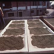 Photo by David Stephenson.  Tibetan herbal medicine dries on racks in Dharamsala, India, in 11/91.