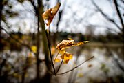 "London. United Kingdom, ""Autumn Leaves"". Thames Path 'Surrey Side"" Mortlake. Surrey. River Thames, <br /> <br /> Tuesday  05/12/2017<br /> <br /> © Peter SPURRIER"